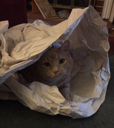 Scooter - the cat is not out of the bag.